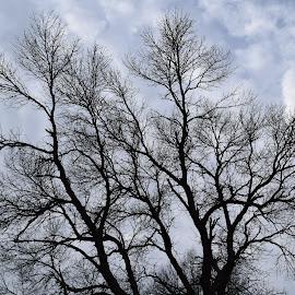 Winter Morn by Kasha Newsom - Nature Up Close Trees & Bushes ( wisconsin, blue sky, winter, tree )