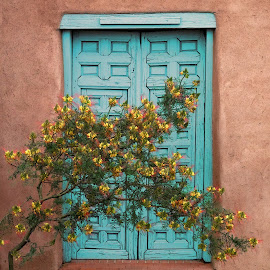 Bird of Paradise Door by Shawn Thomas - Buildings & Architecture Architectural Detail