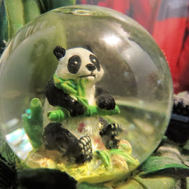 Baby panda  by Maricor Bayotas-Brizzi - Artistic Objects Glass
