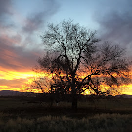 Tree and Sunset by Tracy Lynn Hart - Instagram & Mobile iPhone ( winter, sunset, trees, leaves )