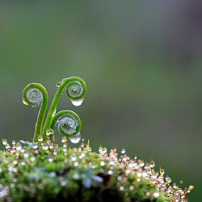 by Benny Sugiarto Eko Wardojo - Nature Up Close Leaves & Grasses