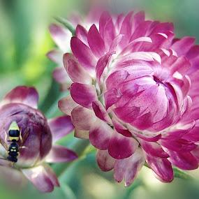 by Ksenija Glavak - Flowers Flowers in the Wild