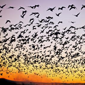 Blast Off! by Mark Theriot - Animals Birds ( bosque, dawn, morning, birds )