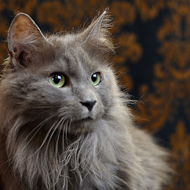 Penelope by Dan Justes - Animals - Cats Portraits