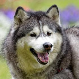 Dog 878_DxO.jpg