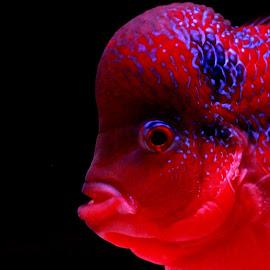 by Soumadip Mukherjee - Animals Fish