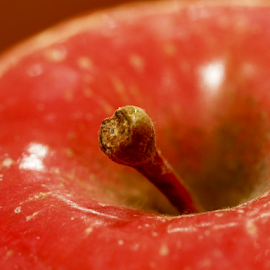 by Dave Feldkamp - Food & Drink Fruits & Vegetables ( apple stem, apple, fall, stem, red delicious )