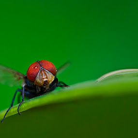 by Ab Photowork's - Animals Insects & Spiders