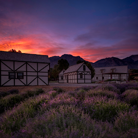 Morning Glow by Robert Fawcett - Buildings & Architecture Other Exteriors ( utah, sunrise, mountains, places, mona, travel, lavender, landscape )