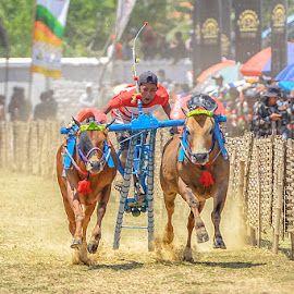 Bull Racing by Syarif Rohimi - Sports & Fitness Other Sports