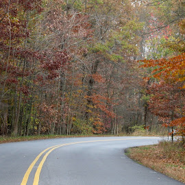 Fall from The Great Swamp Road, N.J. by Jen Henderson - City,  Street & Park  Street Scenes (  )