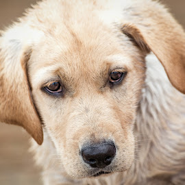 Dog by Dave Lipchen - Animals - Dogs Puppies