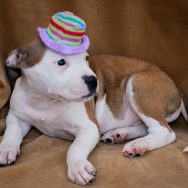 by Myra Brizendine Wilson - Animals - Dogs Portraits ( canine, dogs, pet, animal,  )