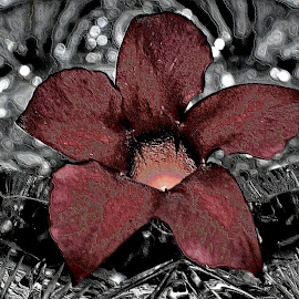 American Brilliance by Teresa Wooles - Digital Art Things ( red flower, balck and red )