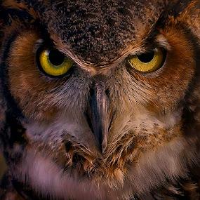 Stare Down by Cheri McEachin - Animals Birds