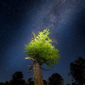 Poiana Beletiana by Adrian Urbanek - Nature Up Close Trees & Bushes