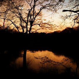 the lake by Kathleen Devai - Landscapes Sunsets & Sunrises ( water, reflection, trees, lake, branches )