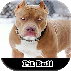 Meu PitBull for PC-Windows 7,8,10 and Mac