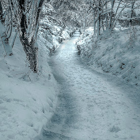 Winter has arrived  by Kain Dear - Landscapes Weather ( winter, cold, ice, snow, path, forest )