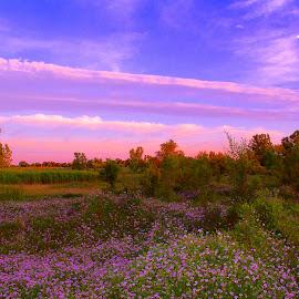 Prairie View Off Bluff by Keith Lowrie - Landscapes Prairies, Meadows & Fields ( grasses, paririe, trees, meadows, landscapes, flowers, prairie view, shrubs, fields, bluff )