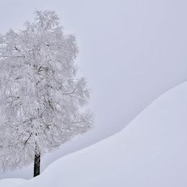 Čarobna zima by Bojan Kolman - Nature Up Close Trees & Bushes