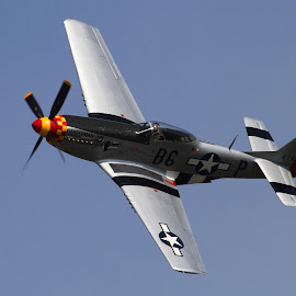 P51 Mustang Gentleman Jim by Bruce Arnold - Transportation Airplanes