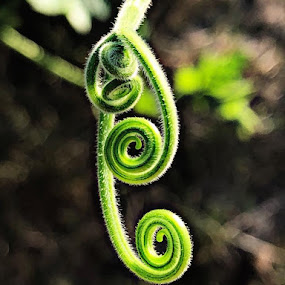 by Heidi George - Nature Up Close Other plants