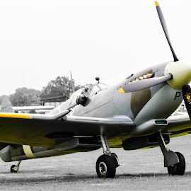 Spitfire by Marina Haigh - Transportation Airplanes