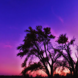 Sunset by Jolene Erickson - Landscapes Waterscapes ( water, tranquil, sunset, fall, trees )