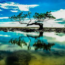 by Setiawan Halim - Nature Up Close Trees & Bushes