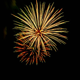 Black And Gold by Brenda Hooper - Abstract Fire & Fireworks ( abstract, 4th of julu, fireworks, independence day, fire,  )