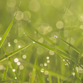 Dew by Rusman Budi Prasetyo - Landscapes Weather (  )