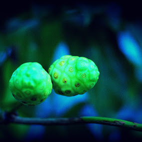 Twin Noni by CRISTINA  CASTRO - Nature Up Close Gardens & Produce ( plant, fruit, herb, green, noni )