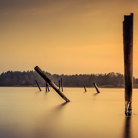 Random stick in the sea by Maths Karlsson - Landscapes Waterscapes ( sweden, sunset, ljungskile, uddevalla, sticks, long exposure, still, yellow, longexposure, sun )