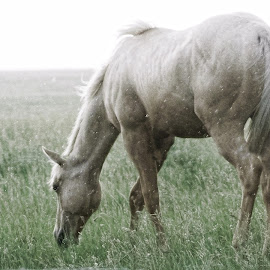 In The Rain by Sheen Deis - Animals Horses ( pets, rain, farm animals, animals, fields, rainstorm, pasture, horses )