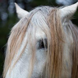White horse closeup by Jack Nevitt - Animals Horses ( farm, horse, white, standing, eye )