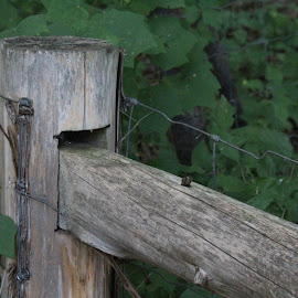 Fence Post by Eryn Shepherd - Novices Only Objects & Still Life ( fence, post, novice, green, plants )