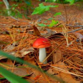 Bright Orange Mushroom by Kristine Nicholas - Novices Only Flowers & Plants ( plant, mushroom, orange, macro, red, fungi, nature, green, plants, nature up close, fungus, mushrooms )
