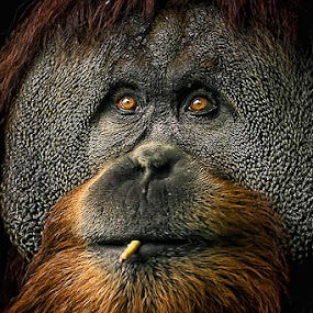 Smoker by Cheri McEachin - Animals Other Mammals