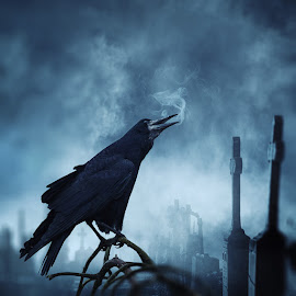 The calling by Caras Ionut - Digital Art Things ( tutorials, psd, cementary, cold, fog, dark, crow, night, manipulation, mist, photoshop )