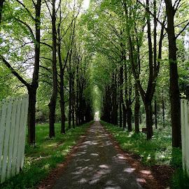 Forest Lane by Gert de Vos - Landscapes Forests