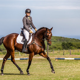 Show jumping 1 by Tommy Glad - Animals Horses ( horse, katelands, horse riding, show jumping, equestrian )