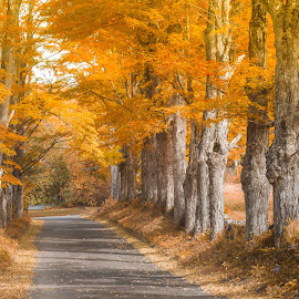 Fall in New Hampshire by David Long - Landscapes Travel ( new hamshire, fall, maple )