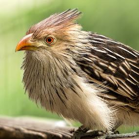 by Judy Rosanno - Animals Birds (  )
