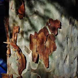 Tree Bark by Sarah Harding - Novices Only Objects & Still Life ( colour, tree, nature, novices only, natural )