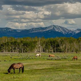 Horse Heaven by Christian Skilbeck - Animals Horses ( sky, horses, nature, horse, landscape )