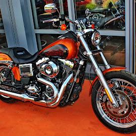 Harley-Davidson 2 - Zagreb,Croatia by Jerko Čačić - Transportation Motorcycles (  )
