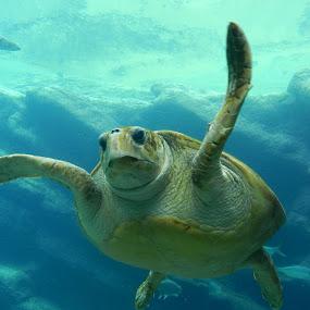 uShaka Marine World by Kirsty Wilkins - Novices Only Wildlife ( ushaka marine world )