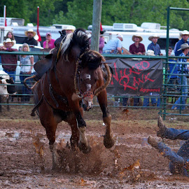 by Buddy Boyd - Sports & Fitness Rodeo/Bull Riding ( mud, ouch, wreck, bronc riding, bronco riding, bronco )
