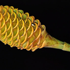 Beehive Ginger by Keple MN - Nature Up Close Other plants ( nature, ginger, beehive, plants, yellow, garden )
